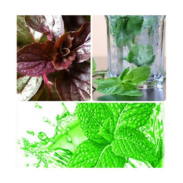 menthol mints The basf institution of force majeure has caused major havoc to all mint products arvensis and menthol prices firm try searching our archives try searching.